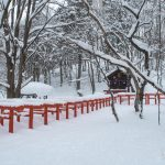 The vermillion torii shrine gates of the Tenma-inari shrine in Togakushi  in deep fresh powder snow.