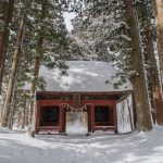 Entrance to the magical cedar forest in Togakushi