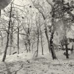 Falling Snow in the Cedar Forest of Togakushi