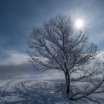 Beautiful snow-covered tree