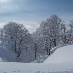 Snow covered trees and fresh powder
