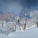 Fresh powder, Nagano