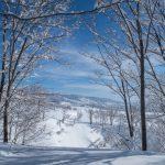 Magical snow, Nagano
