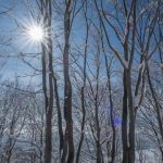 Through the silver beech trees