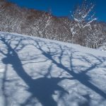 Shadows of trees and branches that look up reindeer