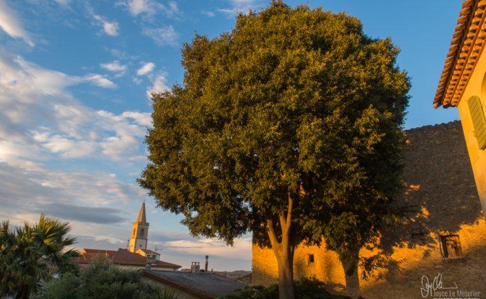 Golden Light in Marrausan