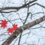 Last Autumn leaves, Yufudake