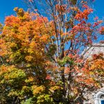 Autumn at Middlebury College, Vermont
