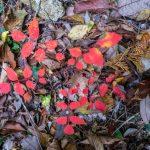 Autumn foliage, Nakatsu