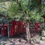 Torii gates at Kunimi-machi-imi Shinto temple, Kunimi