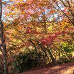 Autumn foliage in Asaji