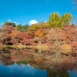 Stitched pano of the pretty Autumn foliage at Bunggno-Asajimachikamiotsuka