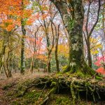 Autumn in the Amagi Highlands,  Izu Peninsula