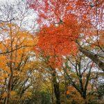 Autumn in the Amagi Highlands,  Izu Peninsula