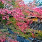 Arai Ryokan,  a traditional Ryokan next to the Katsura River, amidst the Autumn leaves