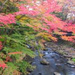 Autumn foliage by the Katsura River