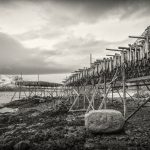 Stockfish drying out