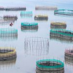 Traditional Fishing Nets, Xiapu, China