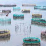 Traditional Fishing Nets, Xiapu, China