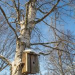 A bird box in the town of Ranea in Swedish Lapland
