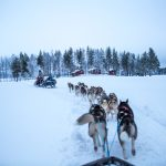 Dog sled rid at the Aurora Safari Camp