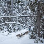 Dog Sled Ride at the Aurora Safari Camp.