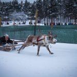 Reindeer Races...poor tired reindeer!