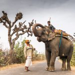 Mahout with an unwell elephant enroute to the village vet, Rajasthan