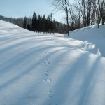 Animal footprints in the snow in Iide, Yamagata Prefecture