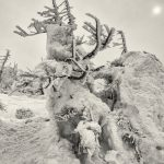 """Insufficient snow cover of the """"snow monsters""""  on Mount Zao"""