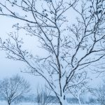 Hijiori Onsen snow shoe trek