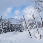 Snow-covered fields and trees in Hijiori Onsen