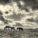 Donkeys, Petra